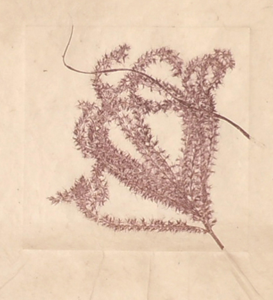 """""""Silver Grass V"""" by Mary D. Ott"""