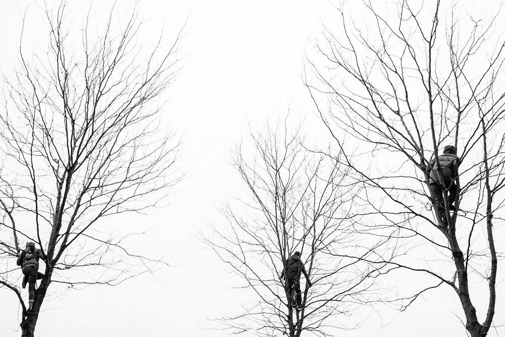 The Tree Amigos by Kanayo Adibe, Three spectators at the women's march in DC