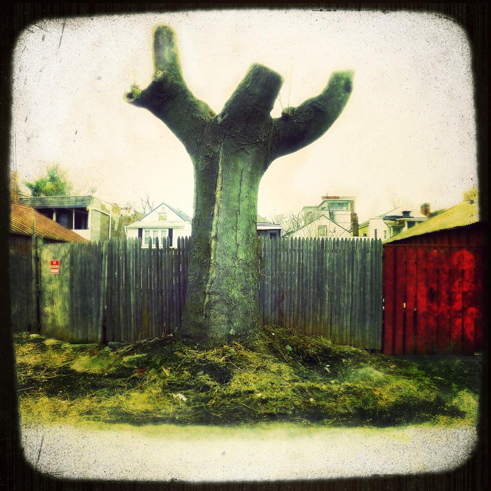 Jesus Tree, Troy NY