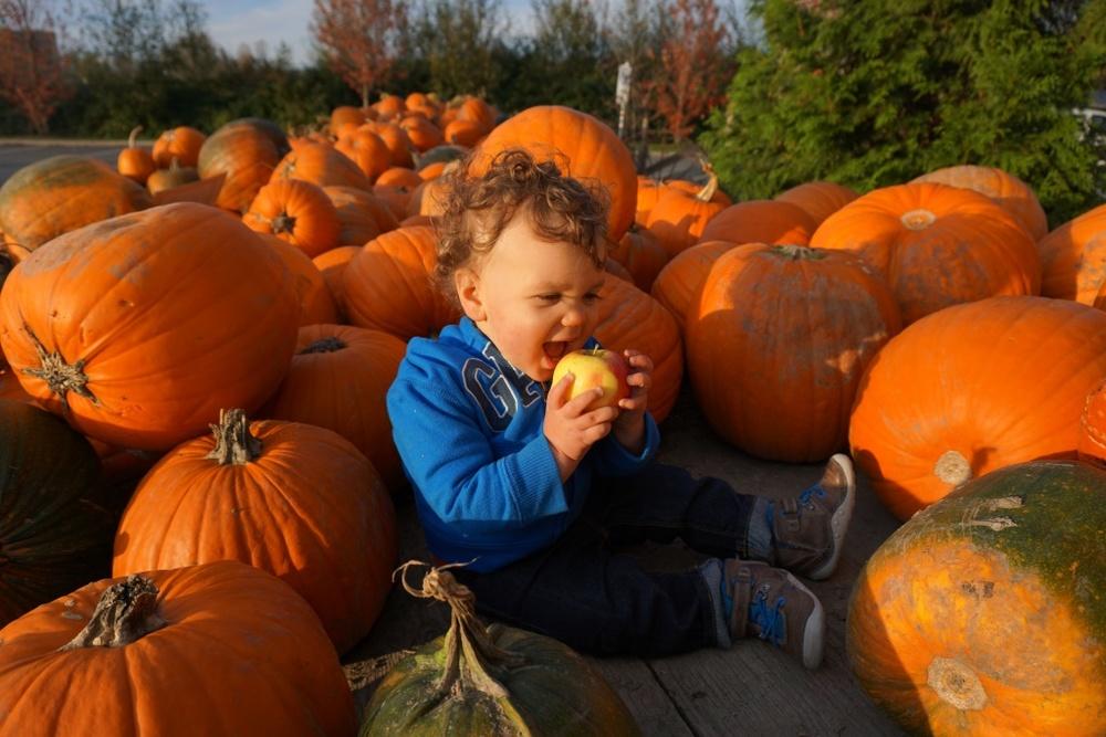 Pumpkin Patch 3.JPG