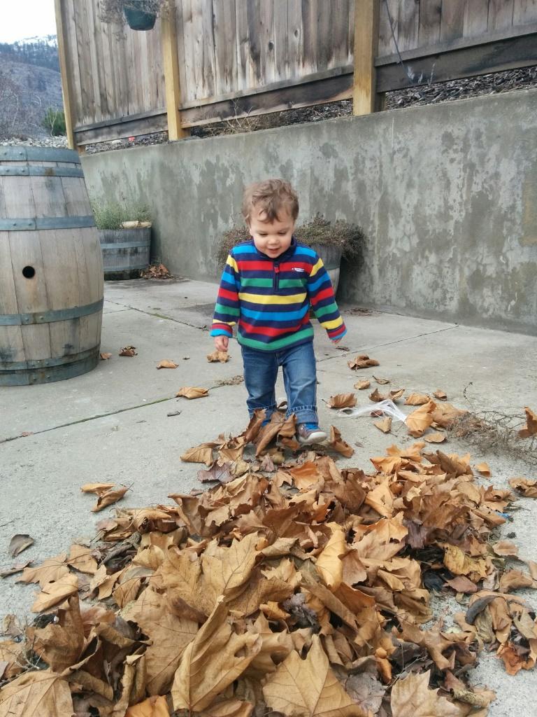 Leaf crunching.jpg