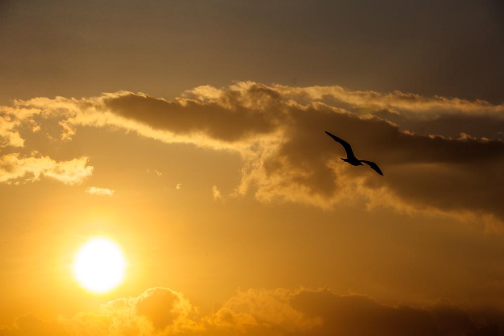 """""""El viento sopla donde quiere: tú oyes su voz, pero no sabes de dónde viene ni adónde va. Lo mismo sucede con todo el que ha nacido del Espíritu"""" San Juan 3,1-8.  Foto: Gustavo Kralj/Gaudiumpress"""