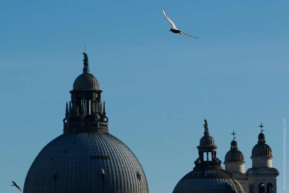 Venecia, Italia: Cúpulas deSanta Maria della Salute. Foto: Gustavo Kralj/GaudiumpressImages.com