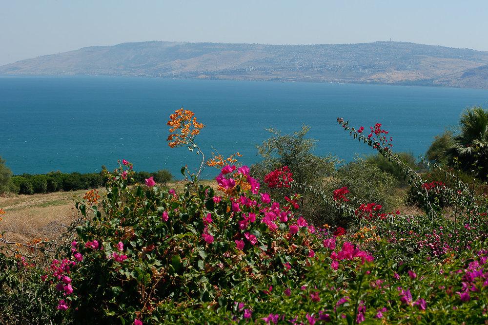 Tierra Santa: El Mar de Galilea visto del Monte de las bienaventuranzas. - Foto: Gustavo Kralj/GaudiumpressImages,com