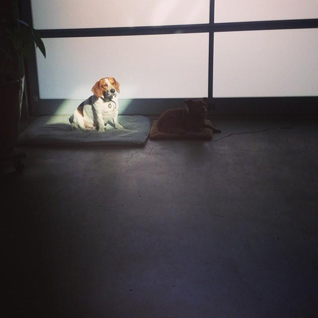 Coop, majestic sundog of Instagram.