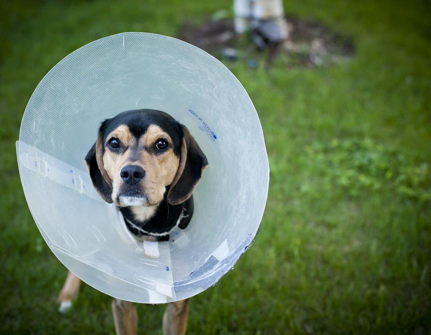 Michigan | 05.25.13   The beagle/cocker spaniel.