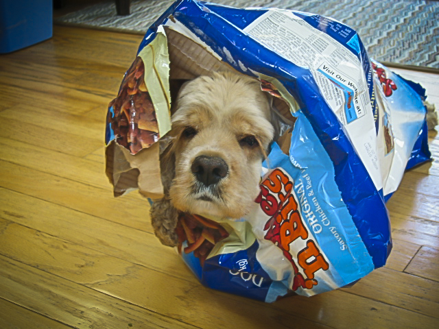 09.17.03 Here is my old dog inside a bag of kibble.