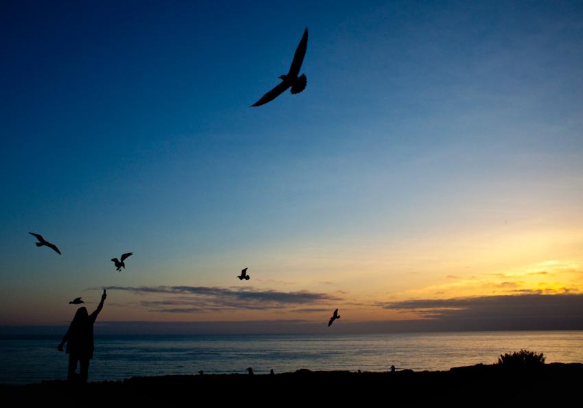 San Diego, CA | 04.04.10 The birdman cometh.