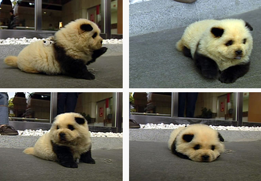 Oh Panda Dog, why aren't you real.