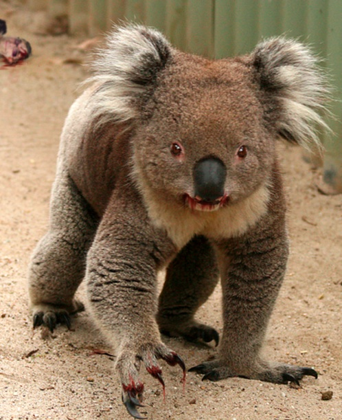 upon searching for an image of a koala grasping a piece of ham, I stumbled upon this image. It looks like it's about to murder, so I made it so. Turns out koalas aren't as cute as I remember them.