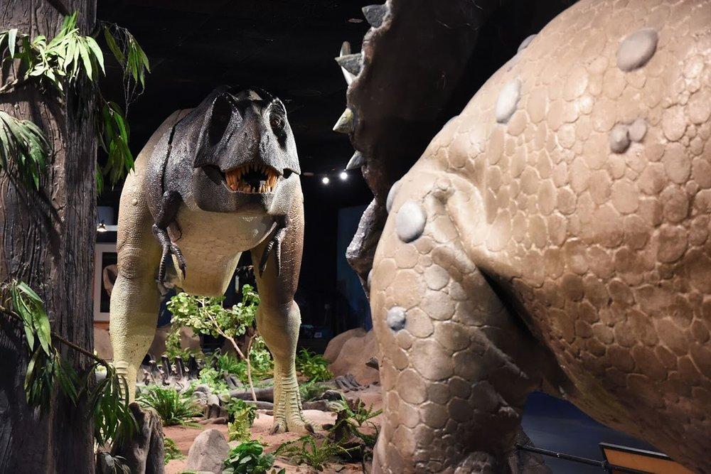 dino-rex.jpg