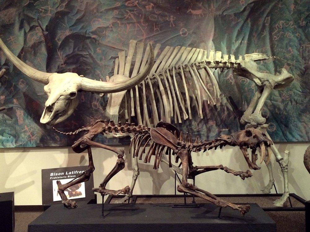 dino-tiger-bison.jpg