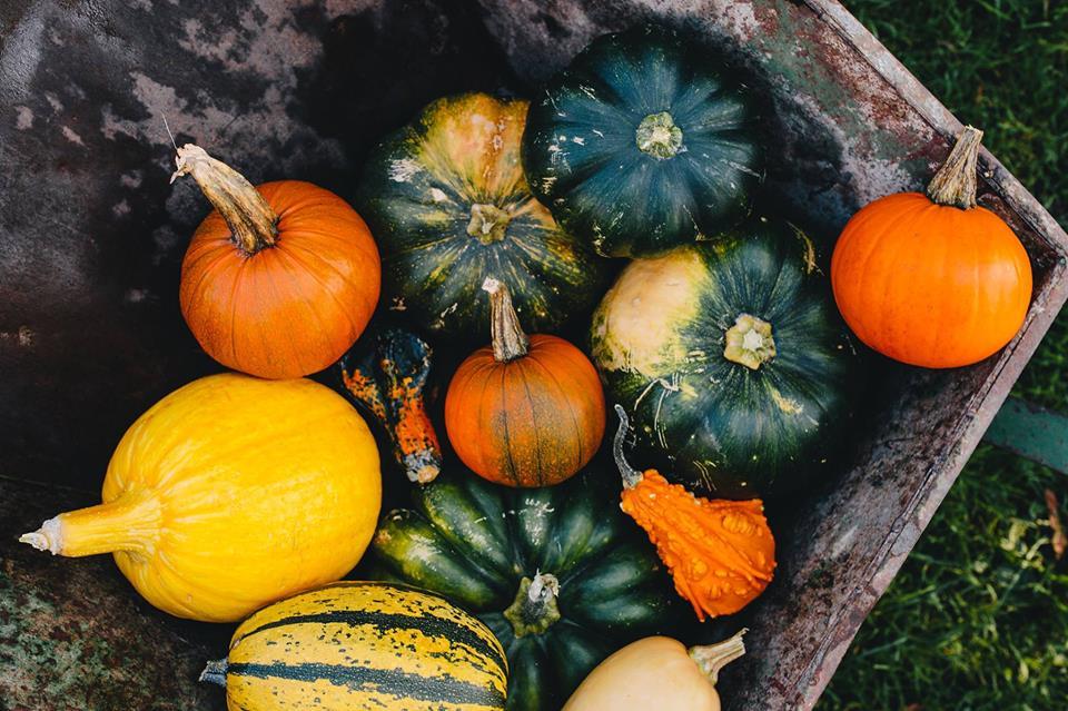 hartford harvest festival