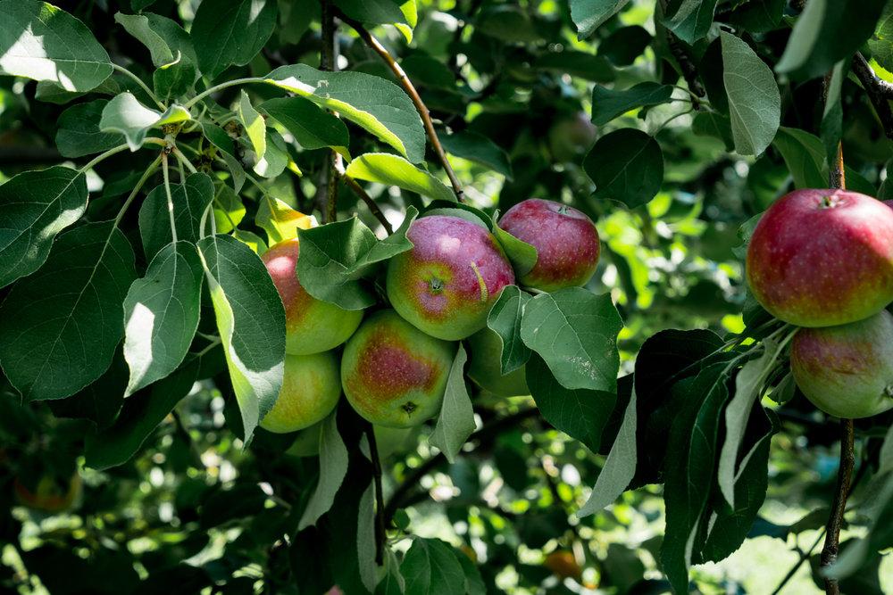 Lyman's Orchard-53-2.jpg
