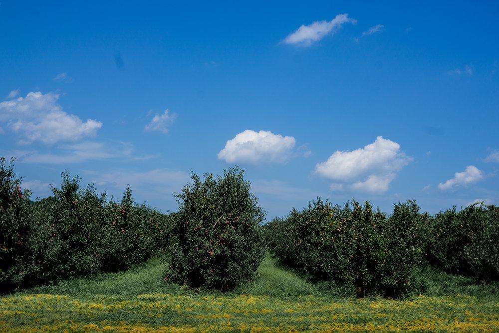 Lyman's Orchard-77-1.jpg