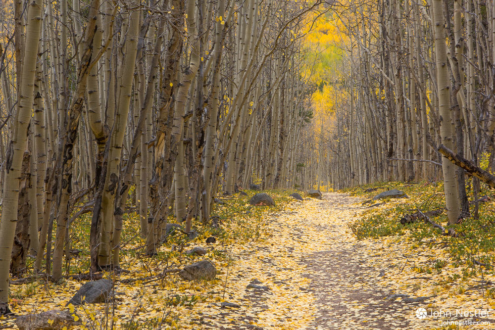 Follow the yellow brick road. Aspen leaves blanket the Colorado Trail as it heads towards Twin Lakes, CO. Shot in Segment 11.