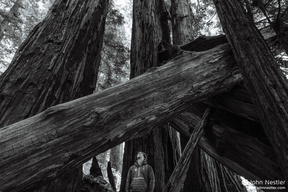 Standing below towering redwoods in  Stout Grove .