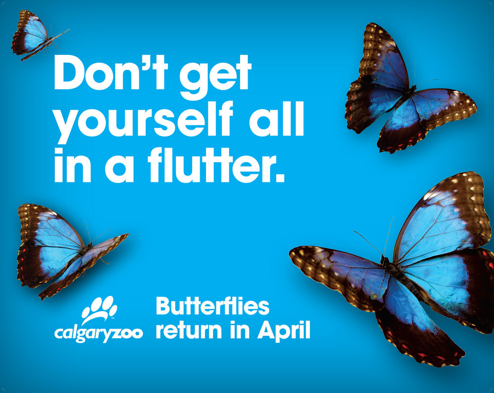 JTAD_Zoo_ButterflySign.jpg