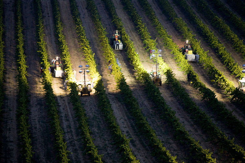 Night Harvest at Laetitia