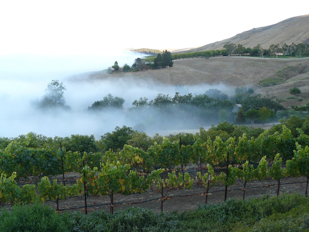 SLO Coast Fog over Vineyards via Phantom Rivers | VAULT29
