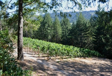 Vineyard {511} on Diamond Mountain