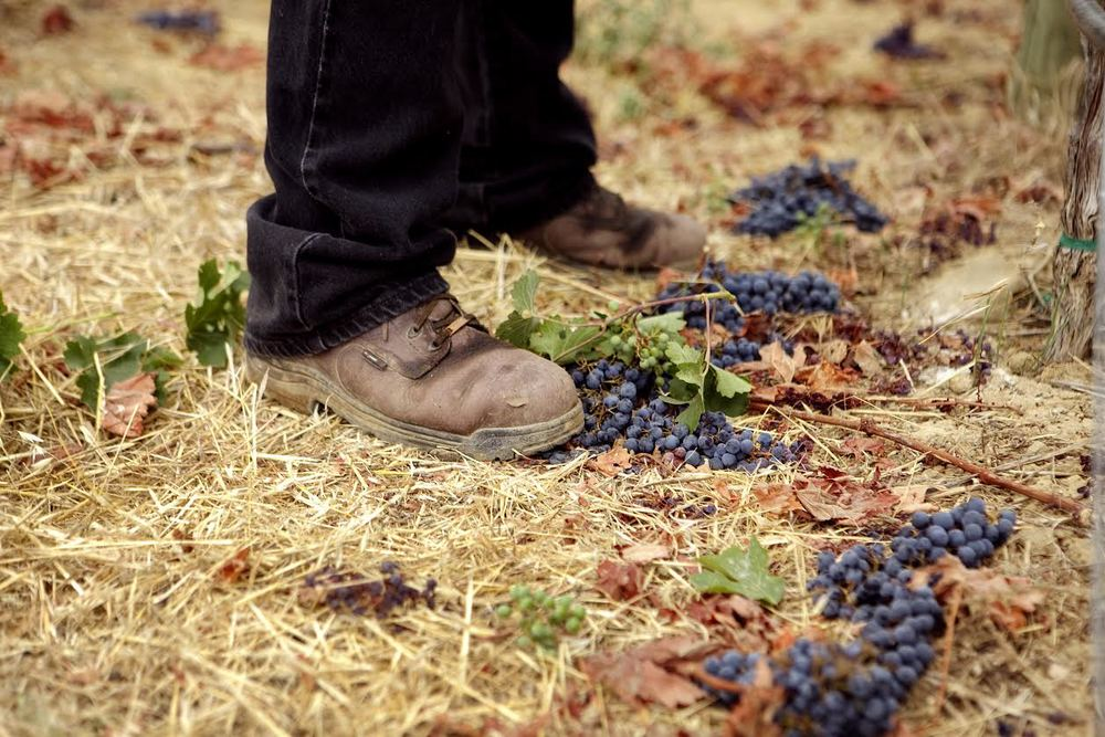 Anthem_boots in vineyard.jpg