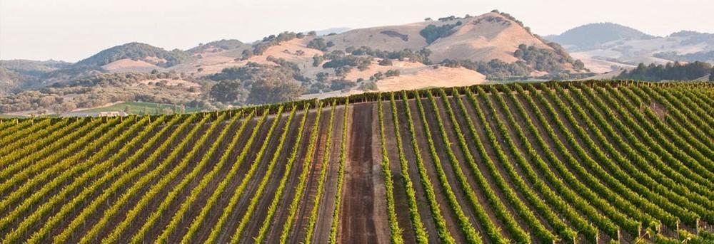Cuvaison Vineyards | VAULT29