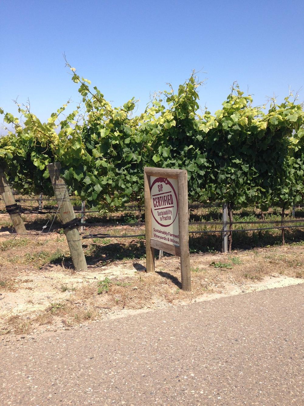 Presqu'ile Winery - SIP Certified | VAULT29