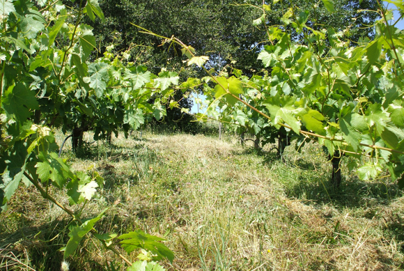La Clarine Farm's Vineyards