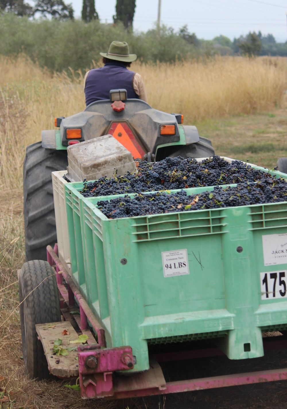 Grapes are ready for their next stage as the farmer drives his fruit to the winemaker.