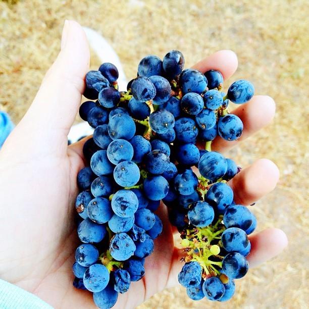 Kampala Wines - Organic Wine | VAULT29