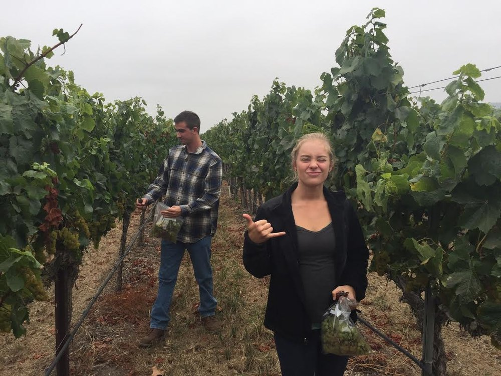 help in vineyards.jpg