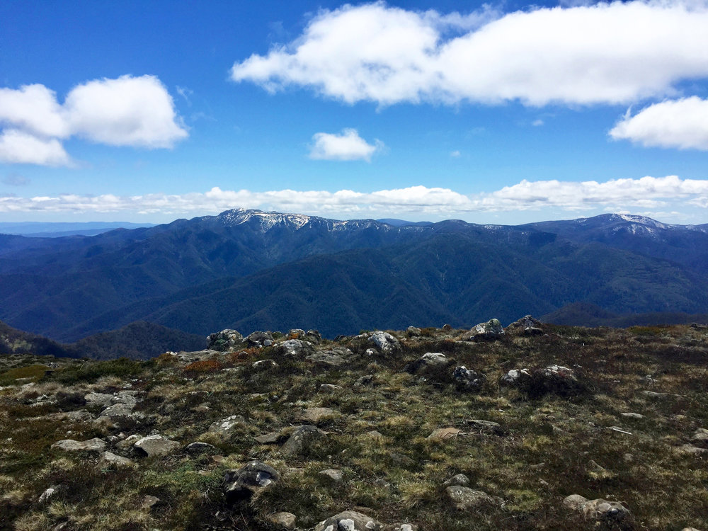 View of Mount Buller and Mount Stirling from The Bluff