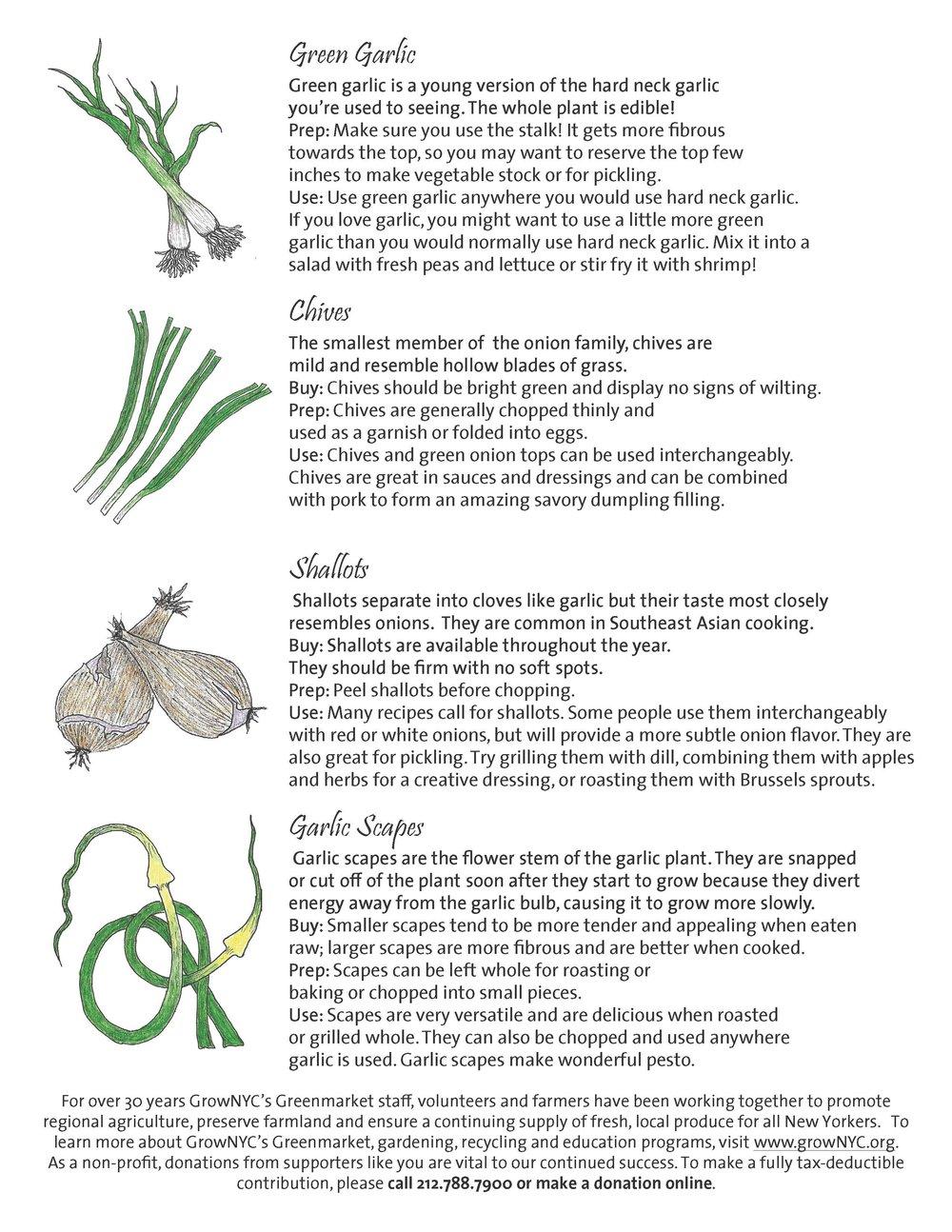 Page 2, Spring Onions & Garlic Handout