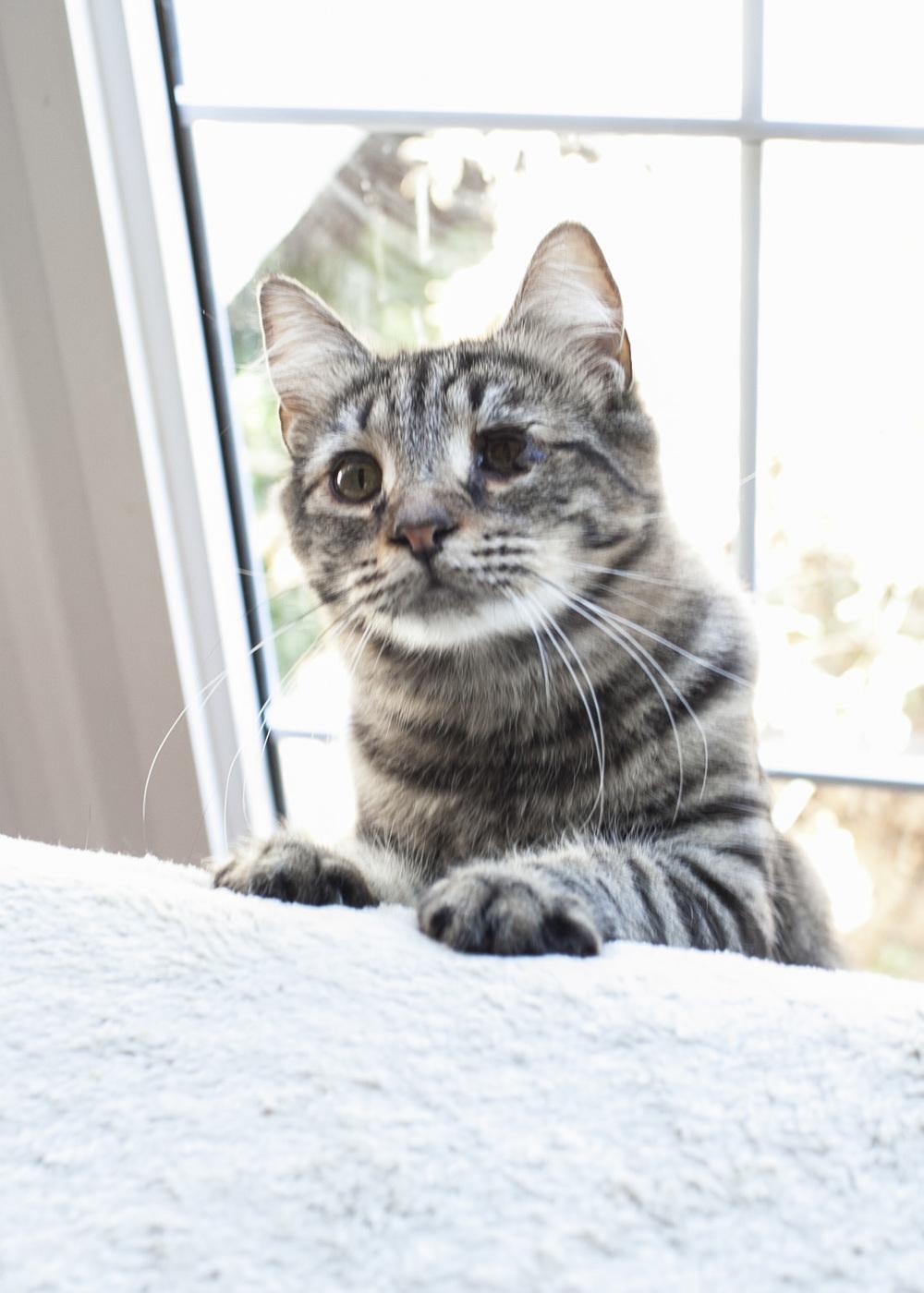 Meow_18.jpg