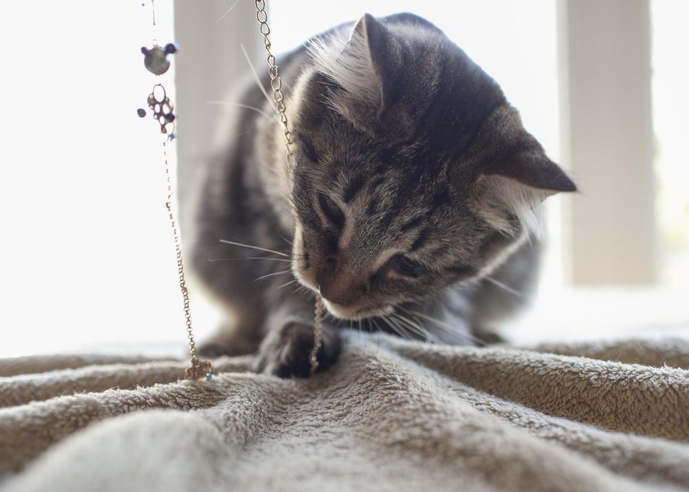 Meow_14.jpg