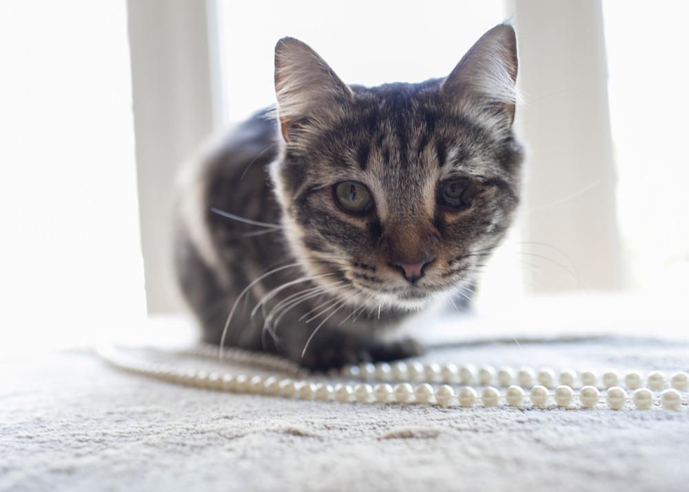 Meow_23.jpg