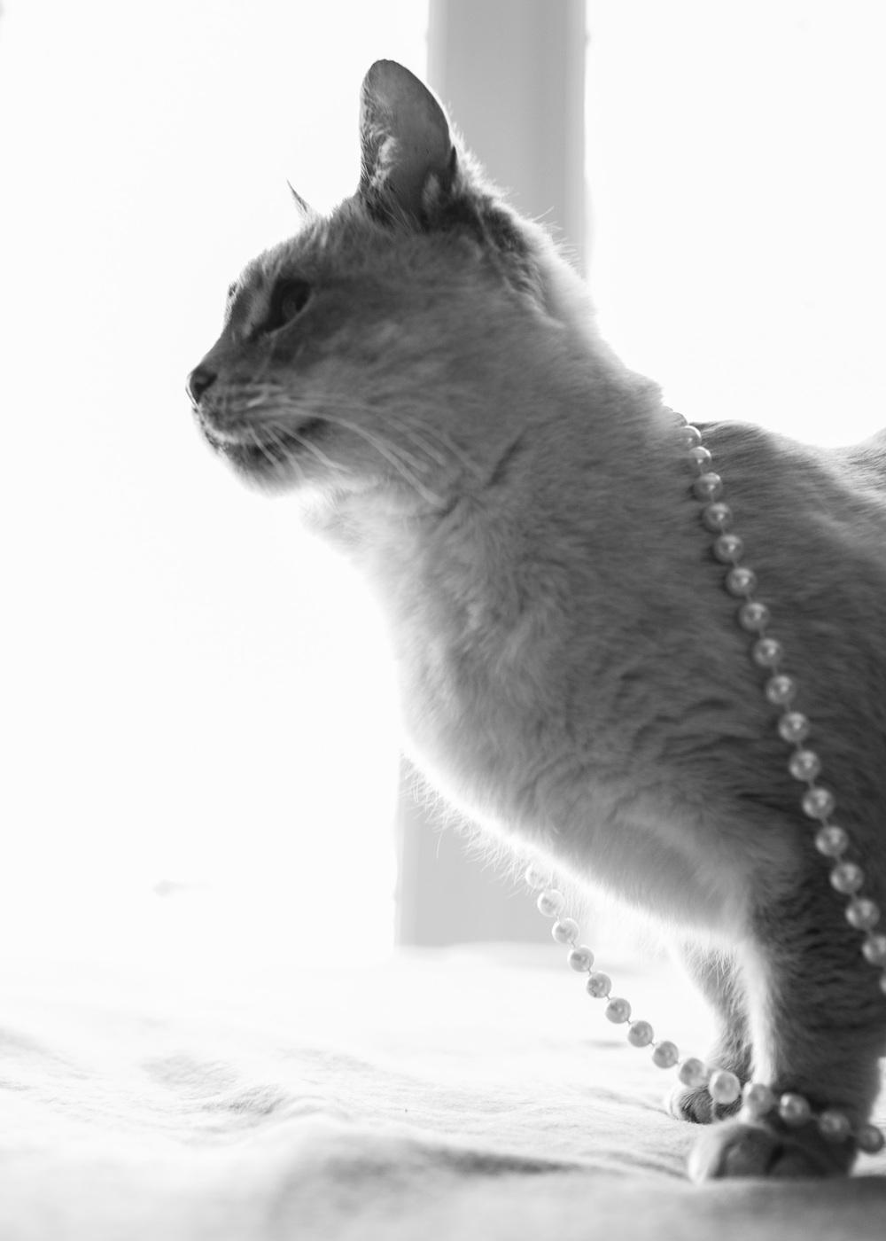 Meow_35.jpg