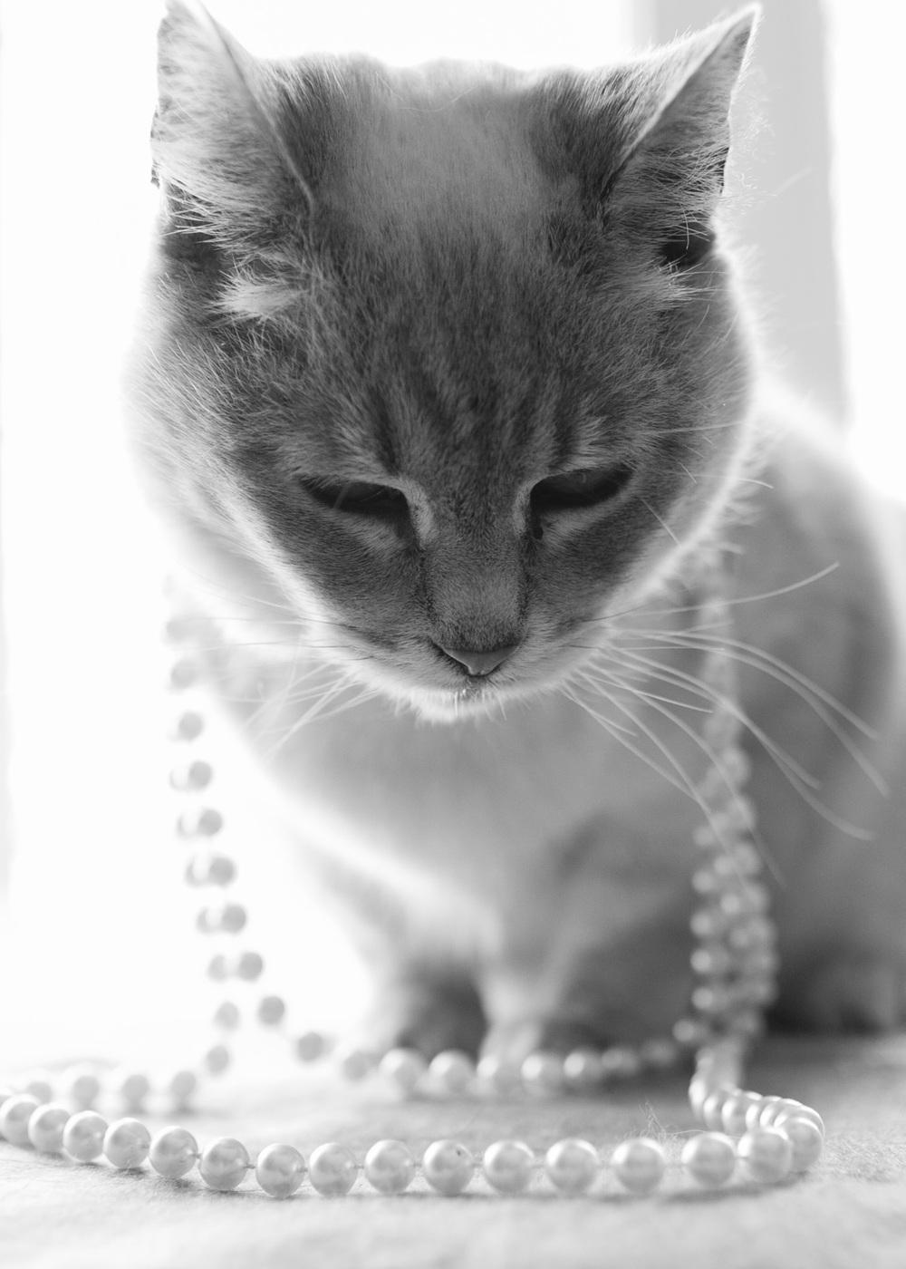 Meow_38.jpg