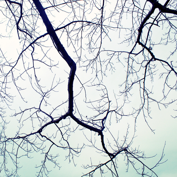 winter+branches_phixr.jpg