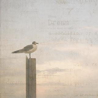 dreaming+seagull.jpg