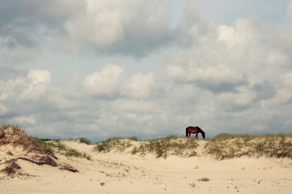 wild+horse.jpg