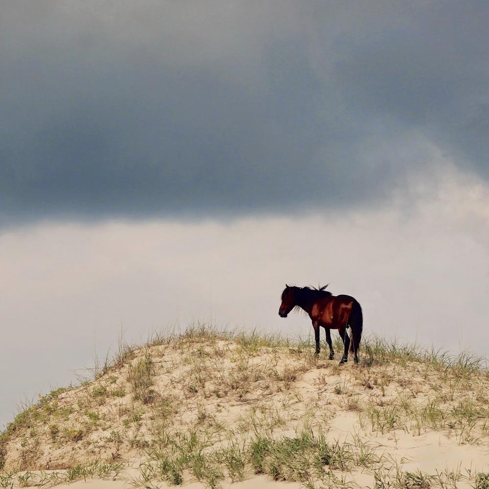 wild+horse3.jpg