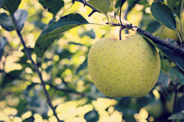 green+apple.jpg