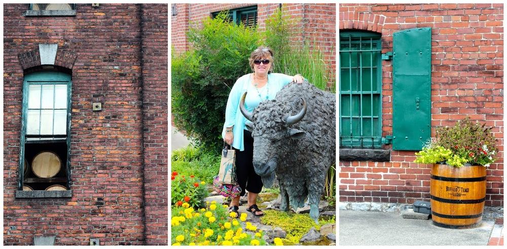 buffalo%2Bcollage%2B1.jpg
