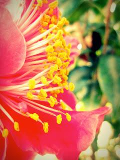 camellia+profile.jpg