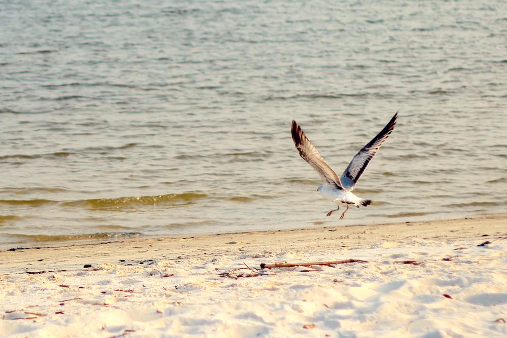 seagull at the beach.jpg