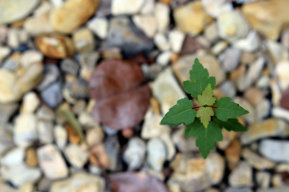 macro photo with green plant and gravel