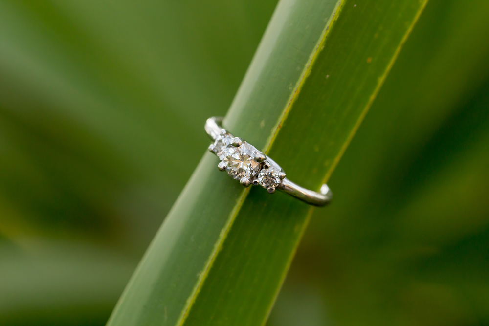 diamond engagement ring on plant (Uninvented Colors Photography)