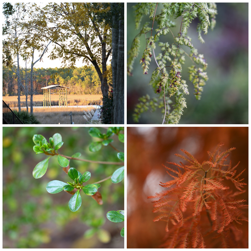Ocean Springs Mississippi nature photography in autumn